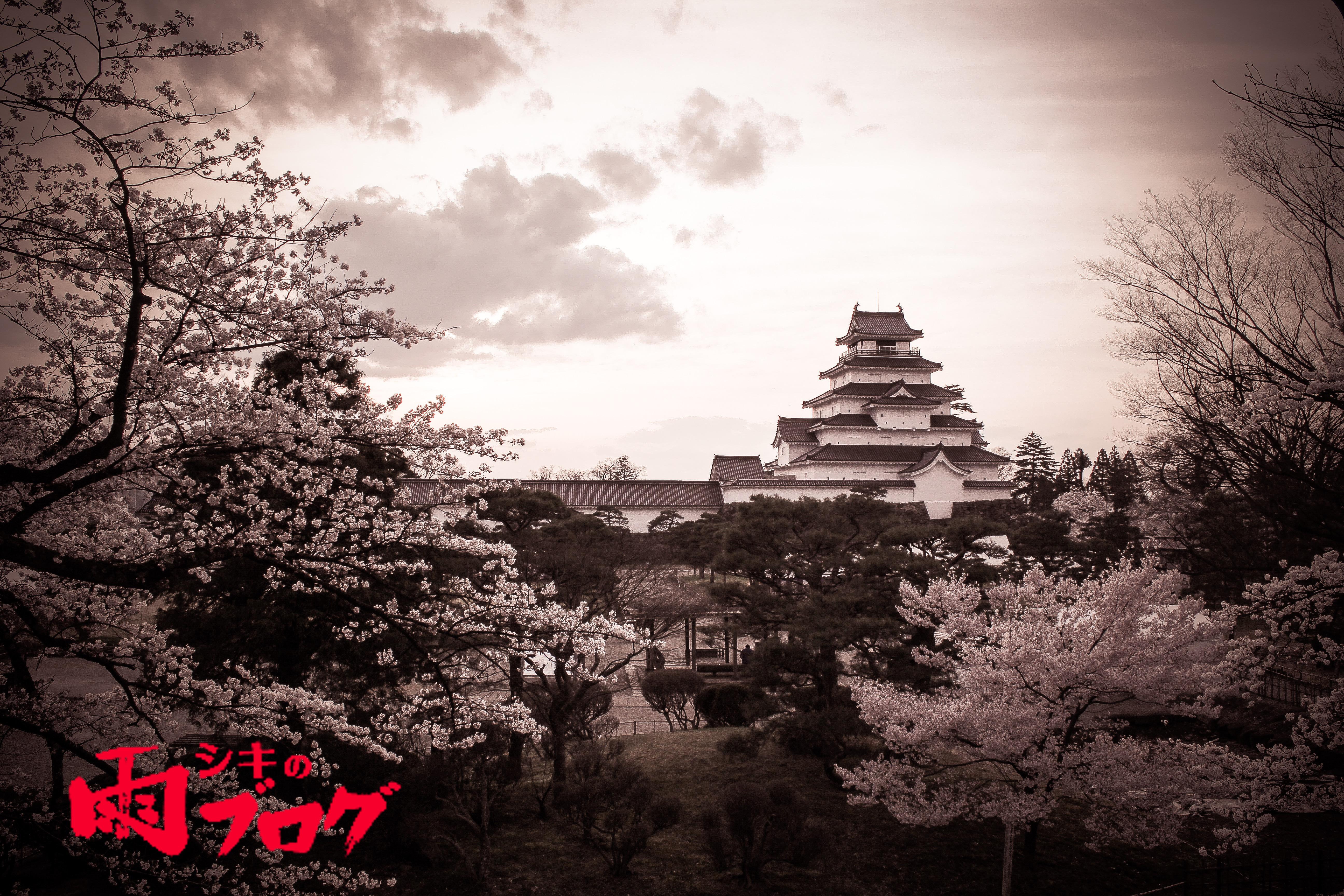 会津に行ったら桜が見頃になっていた話。