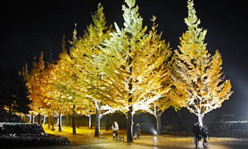 【しき散歩】全長500mのイチョウ並木の観れる!あずま総合運動公園に行ってきた!