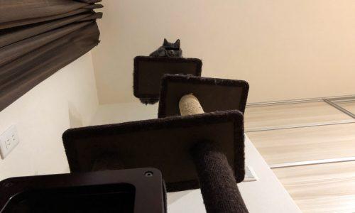 猫の室内飼いの必需品。キャットタワー「モダンルームスクラッチ」を購入してみた。