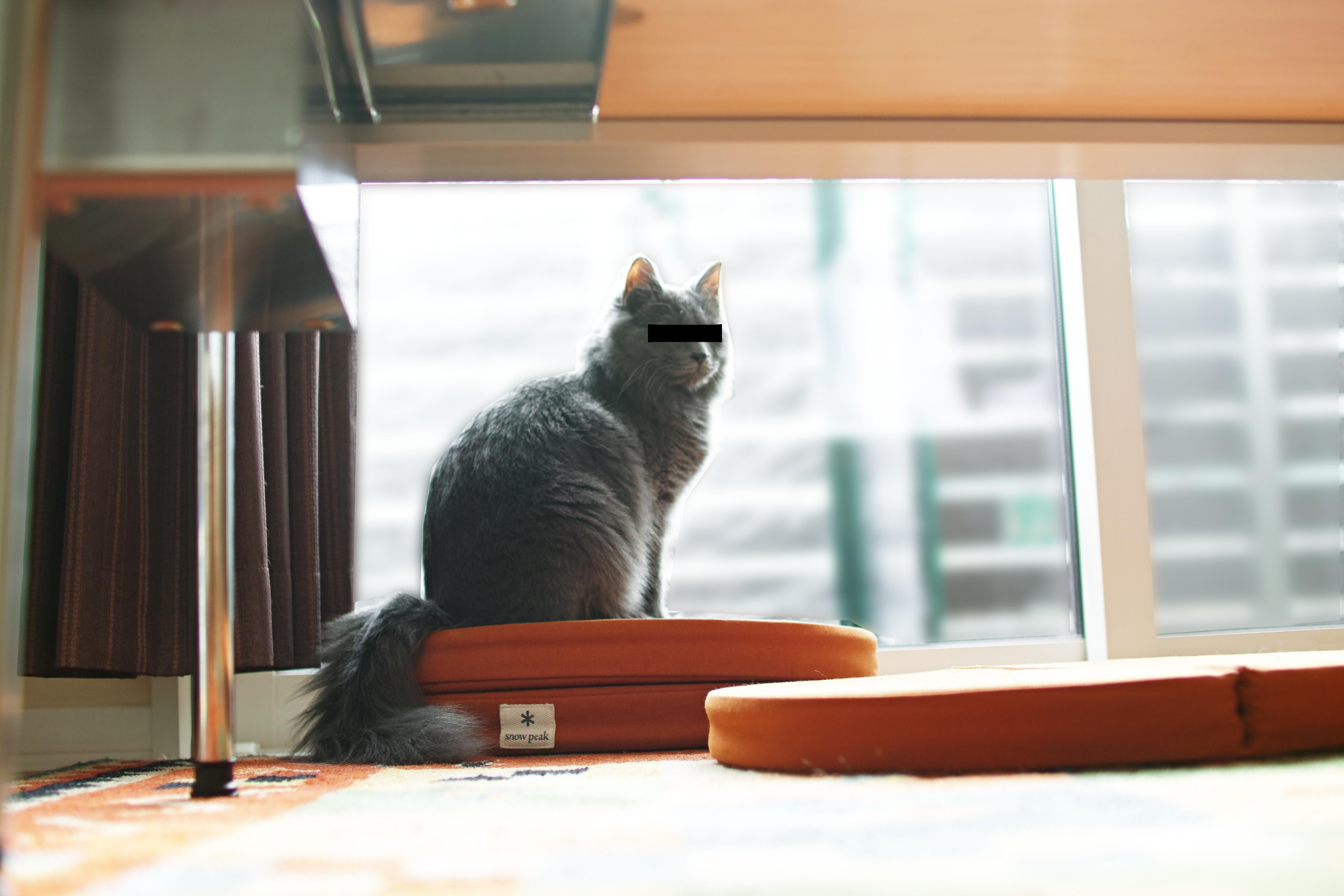 猫をホイホイできる!スノーピーク 「ラウンジクッション」。