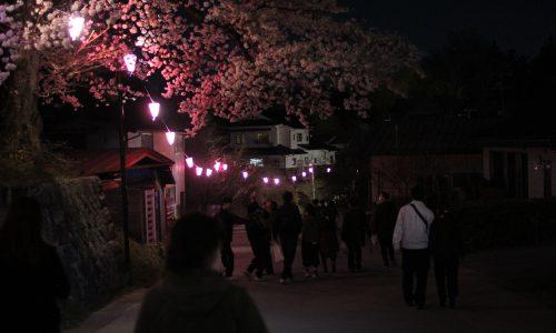 日本一有名なしだれ桜。「三春滝桜」を撮影してきた。